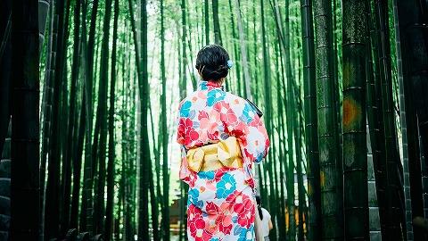 bamboo-trees-1853316_960_720